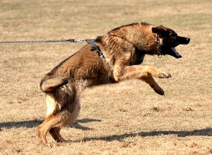 Frustration can Cause Aggression thanks K9 Masters for the photo