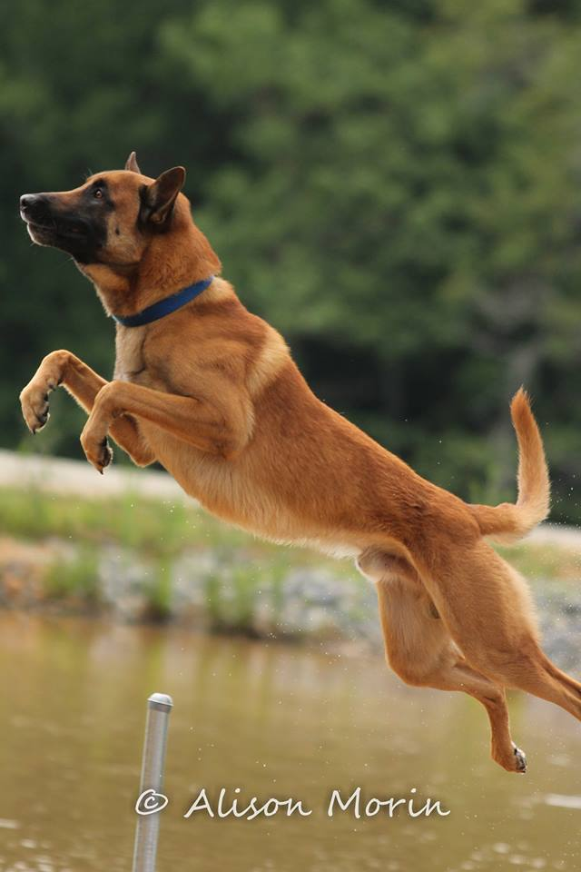 Why Use A Clicker For Dog Training
