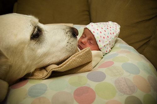Preparing Your Dog for a Human Baby - TheDogTrainingSecret.com