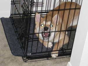 dog hates crate