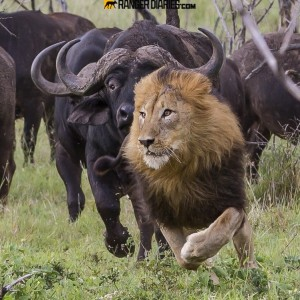 Defensive Drive Saves Your Life thanks Natgeo for the Photo