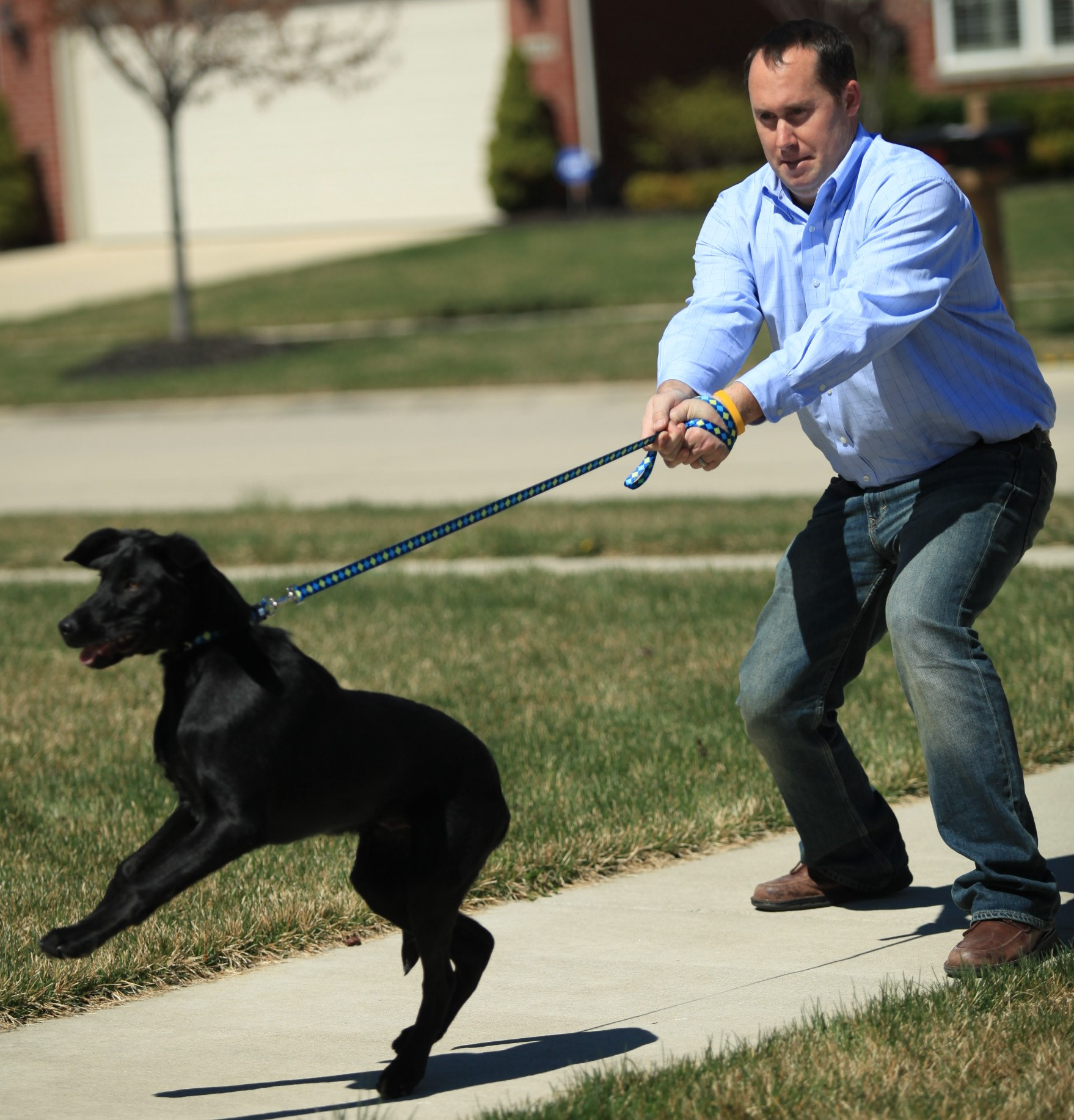 Training An Older Dog Not To Pull On The Leash