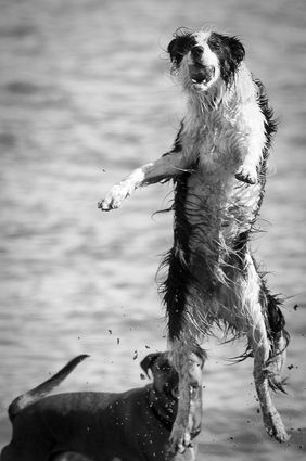 It's always the wet dogs that want to jump!