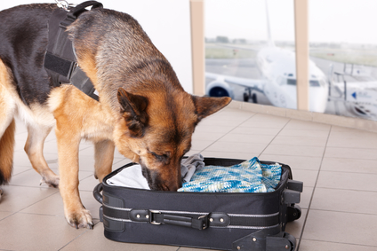 How To Stop Sniffer Dogs Smelling Drugs
