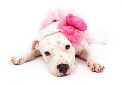 I actually love Pit Bulls and the classic Fighting Breeds