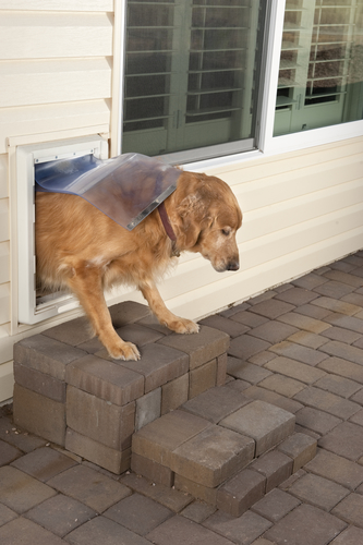 4 Reasons I Hate Doggy Doors and the 1 Reason I Like Them