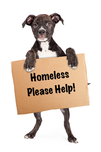 how we treat the homeless Homeless people deserve to be treated the same way, with basic human decency all it takes is the recognition that homeless people are humans too, capable of emotions.