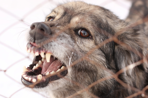 Why We Need to Report Dog Bites and Excessively Aggressive Behavior