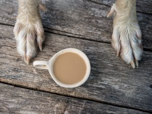 coffee is bad for dogs