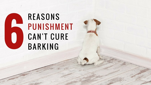 The 6 Reasons Punishment Can't Stop Dog Barking