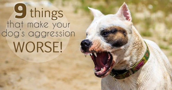 The 9 Things Making Your Dog's Aggression, WORSE!