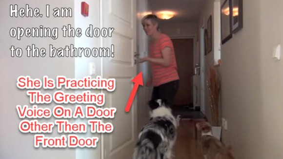 barking, stop dogs barking at door, how to stop dogs from barking at the door