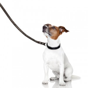 best dog training tips
