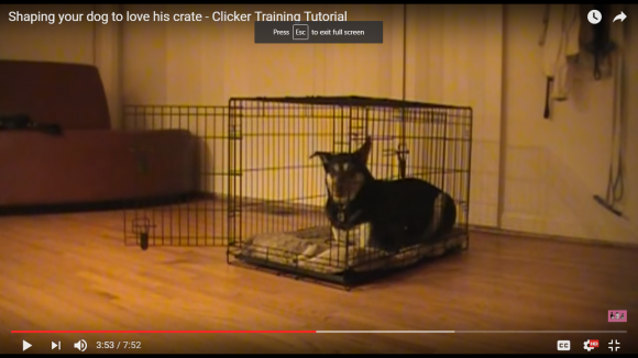 crate training, crate training a puppy