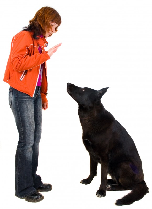 stop dog from jumping on people, how to stop your dog from jumping on people, dog jumping on people, dog jumps on people