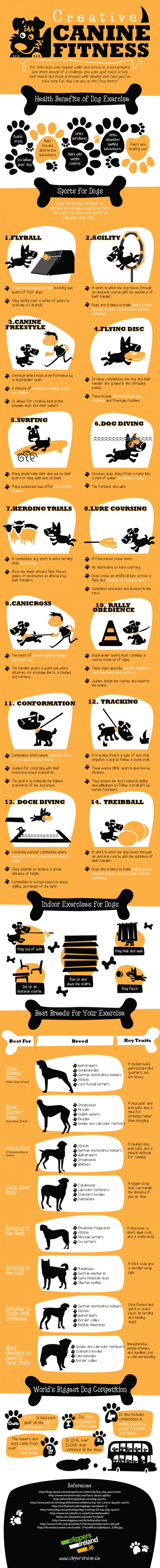 Fun Ways To Keep Your Dog Active!