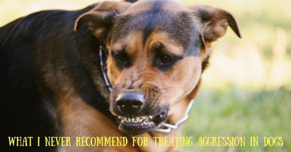 What I NEVER Recommend For Treating Aggression In Dogs