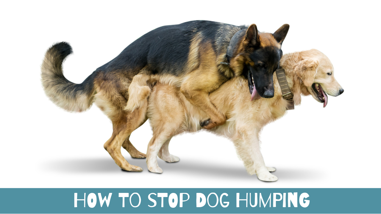 How to Stop Dog Humping - TheDogTrainingSecret com