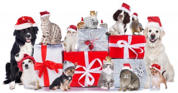 8 Holiday Safety Tips For Your Pet