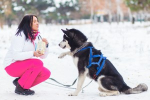 frigid weather and dogs, how cold is too cold for dogs to be outside