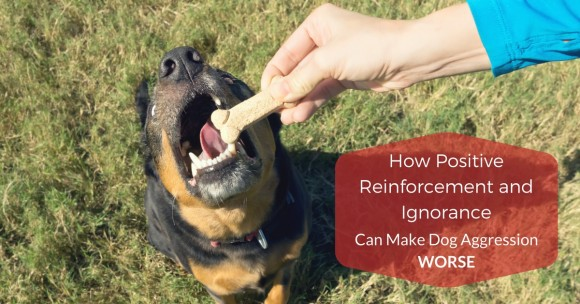 How Positive Reinforcement and Ignorance Can Make Dog Aggression WORSE