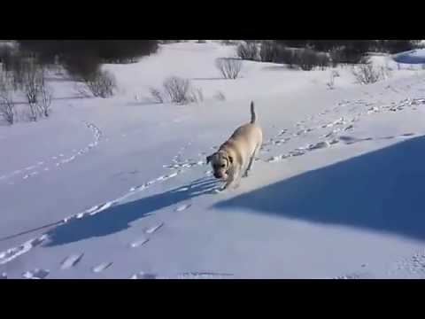 Frigid Weather Dangers For Dogs