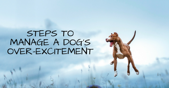 Steps to Manage a Dog's Over-Excitement