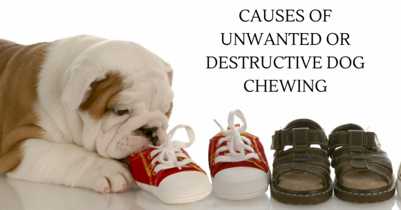 Causes of Unwanted or Destructive Dog Chewing – And How To Stop It