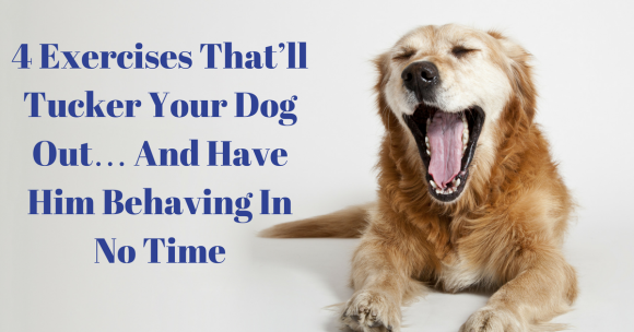 4 Exercises That'll Tucker Your Dog Out… And Have Him Behaving In No Time