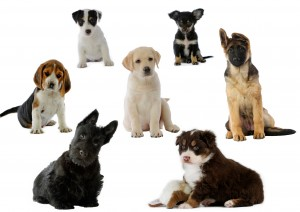 puppy temperament test , Puppy Training