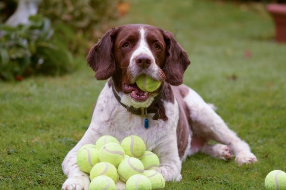 don't use tennis balls in puppy training