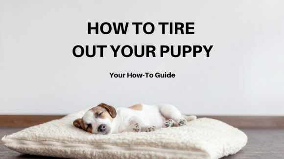 How to Tire out a Puppy: 4 Exercises That'll Have Him Behaving in No Time