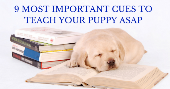 9 Most Important Cues to Teach Your Puppy ASAP