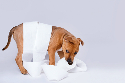 puppy potty training, why is my puppy still having accidents