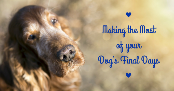 Making the Most of your Dog's Final Days