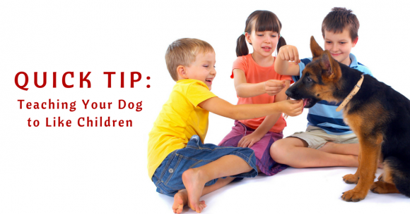 teaching your dog to like children