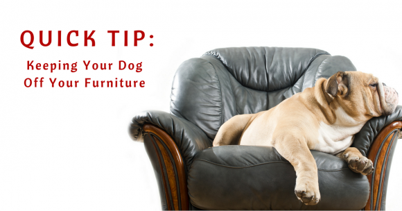 keeping your dog off your furniture