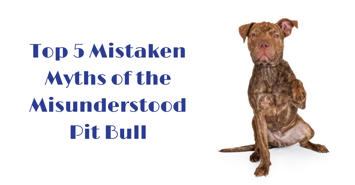 puppy training, pitbull training, myths about pit bulls