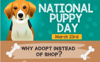 Adopt Instead of Shop On National Puppy Day!