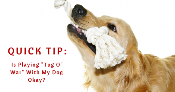 "Quick Tip – Is Playing ""Tug O' War"" With My Dog Okay?"