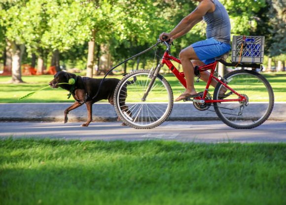 exercising with your dog