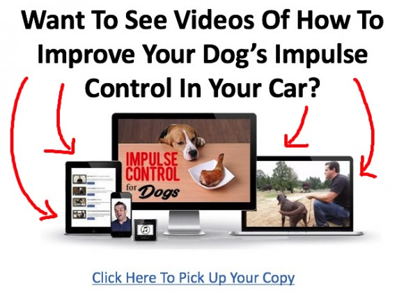 dogs and indoor car safety