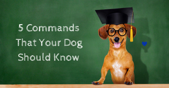 5 Commands That Your Dog Should Know