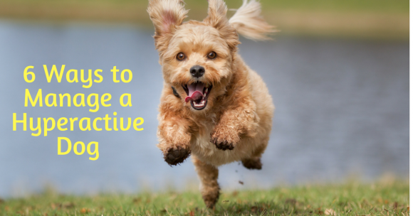 hyperactive dog, ways to manage a hyperactive dog