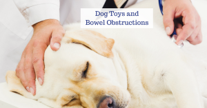 dog toys and bowel obstructions, puppy training