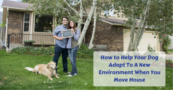 How to Help Your Dog Adapt To A New Environment When You Move House