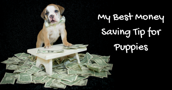 My Best Money Saving Tip for Puppies