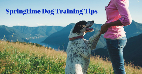 Springtime Dog Training Tips