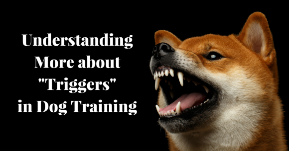 "Understanding More about ""Triggers"" in Dog Training"
