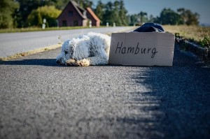 how to help your dog adapt when you move house